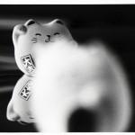 http://99flavortaste.com/files/gimgs/th-5_cats.jpg